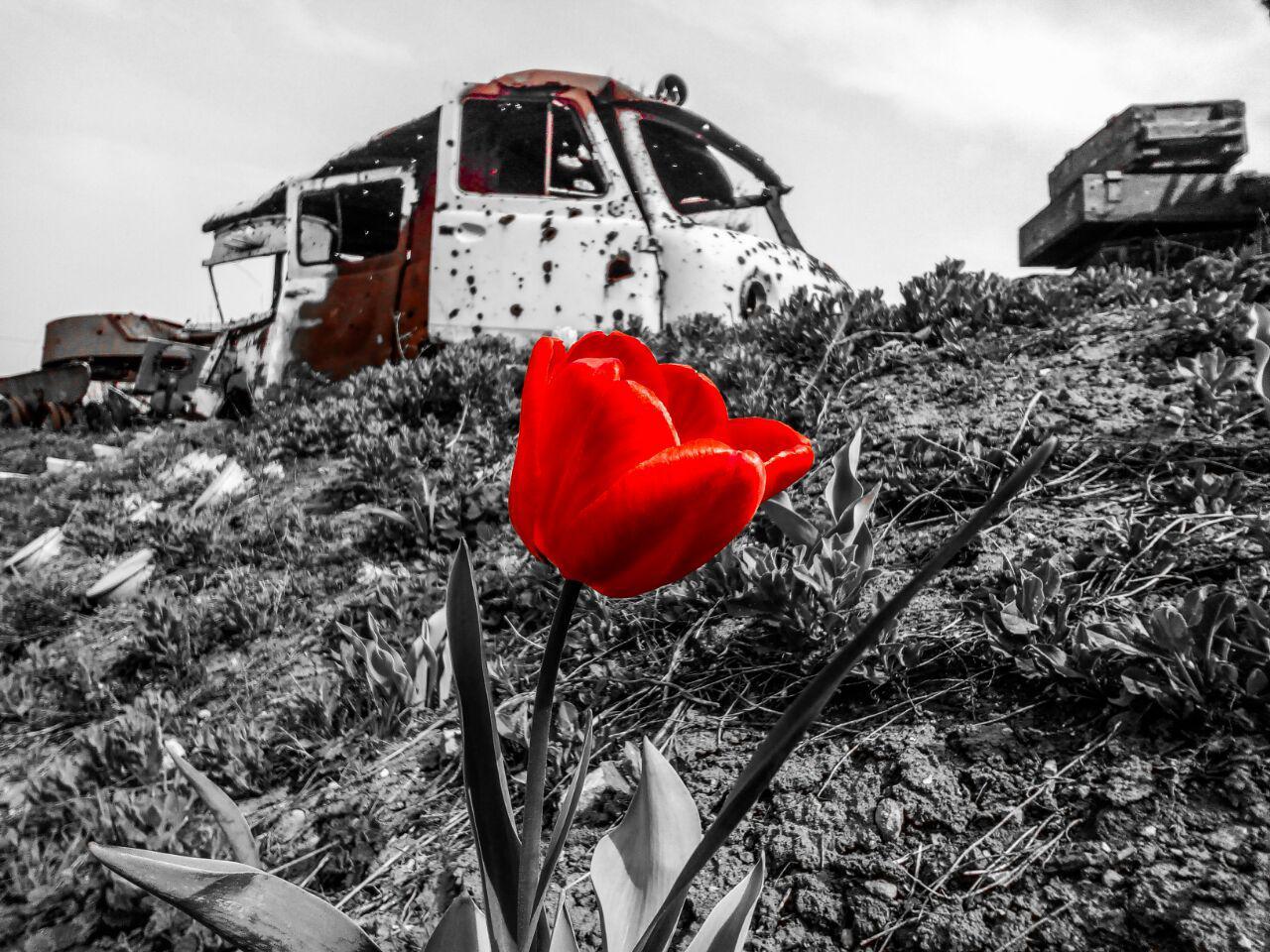Тюльпан на меморіалі