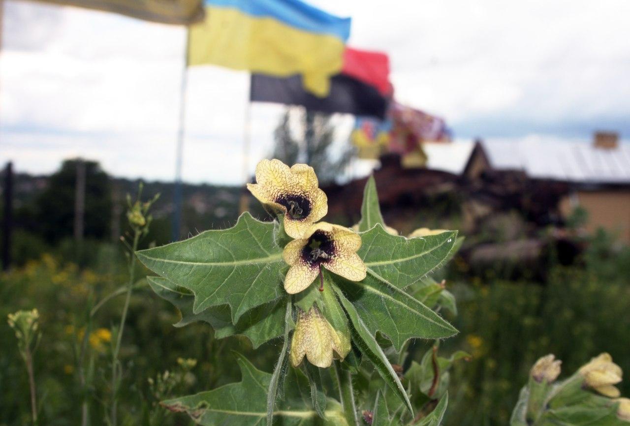 квітка на меморіалі